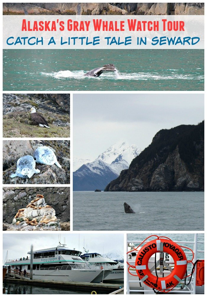 Kenai Fjords Whale Watching Tour