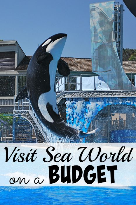 Visit Sea World on a Budget