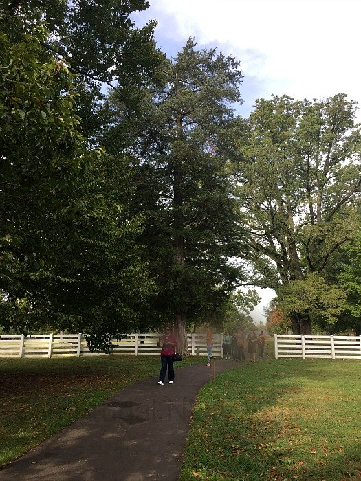 The Hermitage, Home of Andrew Jackson – Nashville, Tennessee Cedar Tree