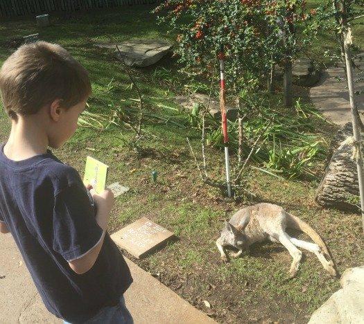 Nashville Zoo - Nashville, Tennessee Baby Kangaroo