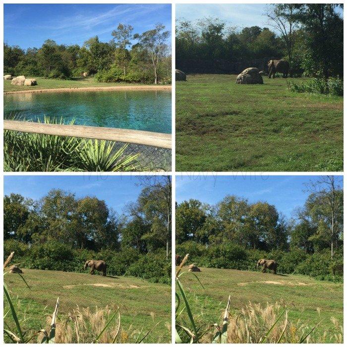 Nashville Zoo - Nashville, Tennessee Elephants