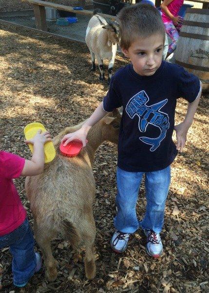 Nashville Zoo - Nashville, Tennessee Eyeing of the Goat