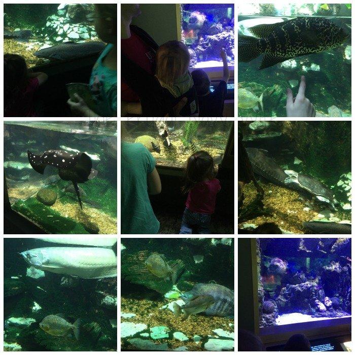 Nashville Zoo - Nashville, Tennessee Fish