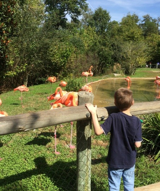 Nashville Zoo - Nashville, Tennessee Flamingo