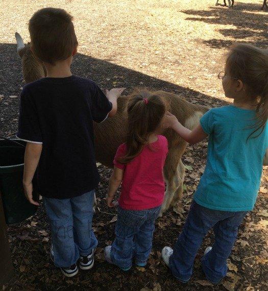 Nashville Zoo - Nashville, Tennessee Goat Petting