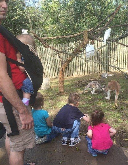 Nashville Zoo - Nashville, Tennessee Kangaroo 2