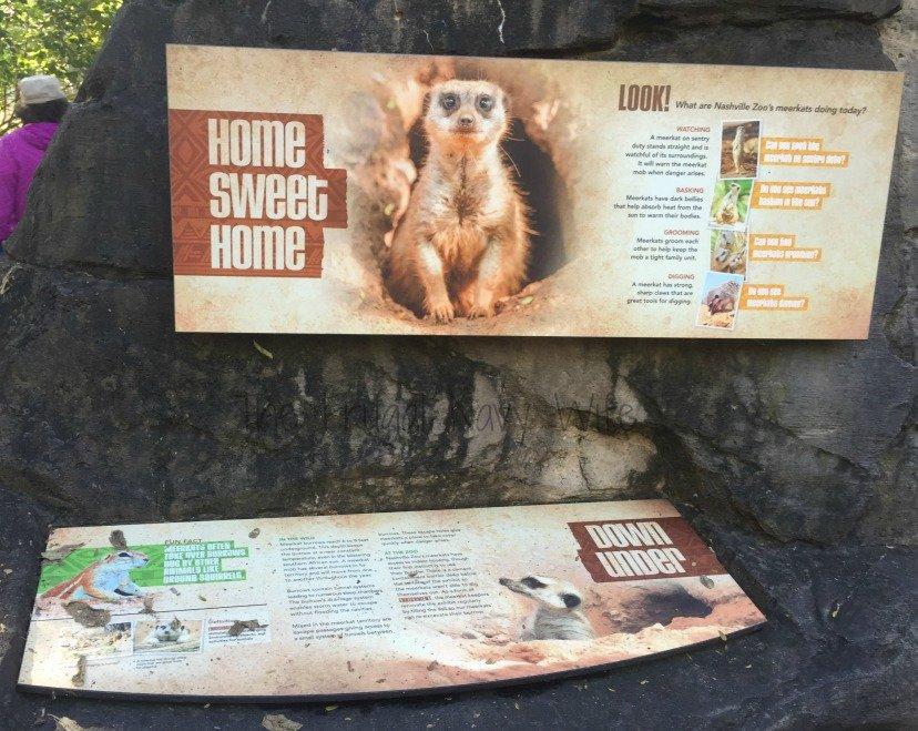 Nashville Zoo - Nashville, Tennessee Meerket Sign