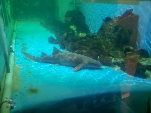 Clearwater Marine Aqarium Sharks