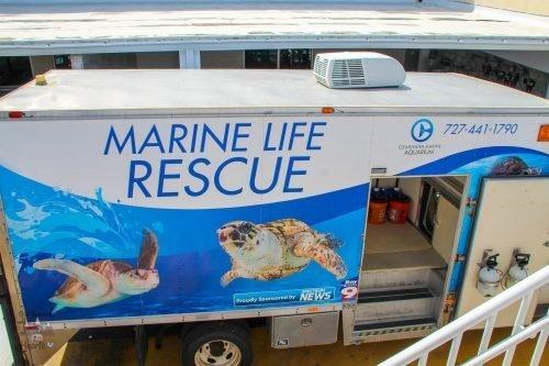 CMA Animal Rescue