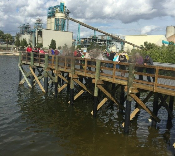 Manatee Viewing Center - Apollo Beach Florida Walkway