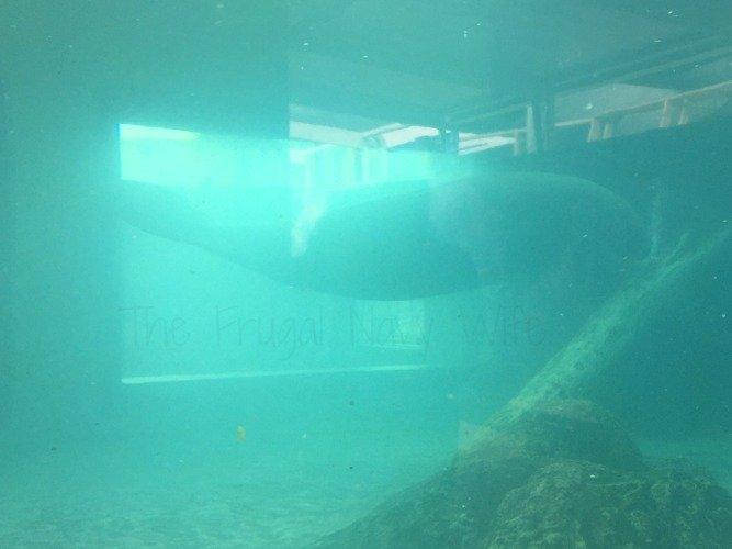 Mote Marine Aquarium - Sarasota Florida Manatee