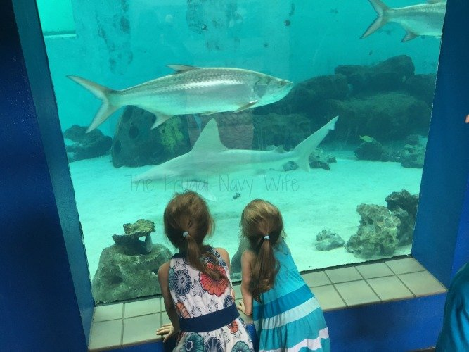 Mote Marine Aquarium - Sarasota Florida Sharks and kids