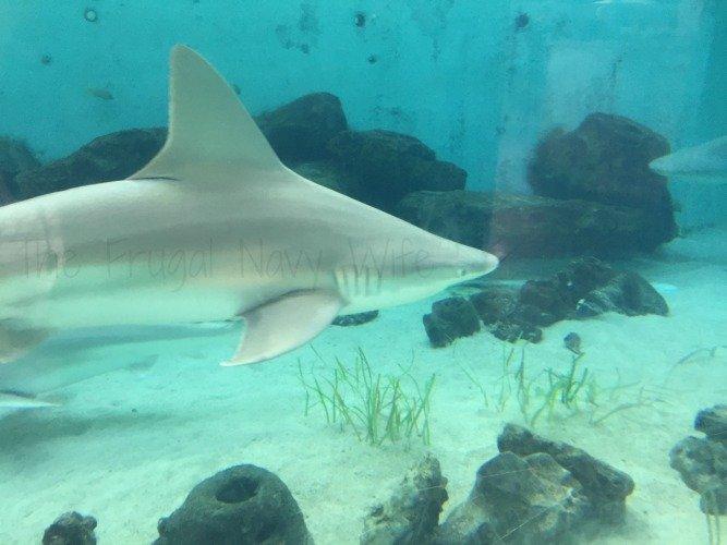 Mote Marine Aquarium - Sarasota Florida Sharks
