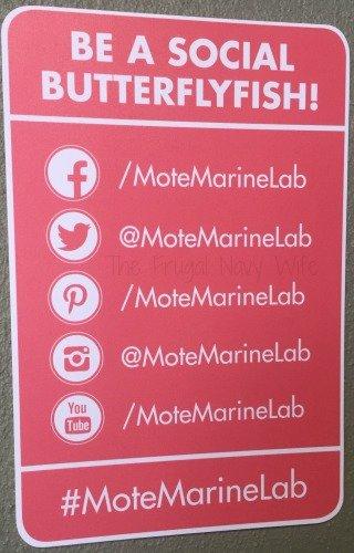 Mote Marine Aquarium - Sarasota Florida Social