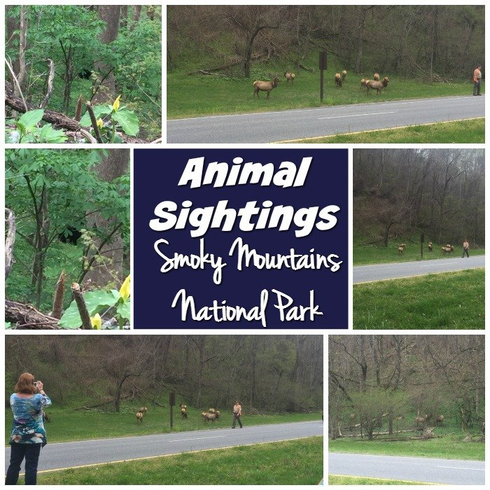Animal Sightings Smoky Mountains National Park
