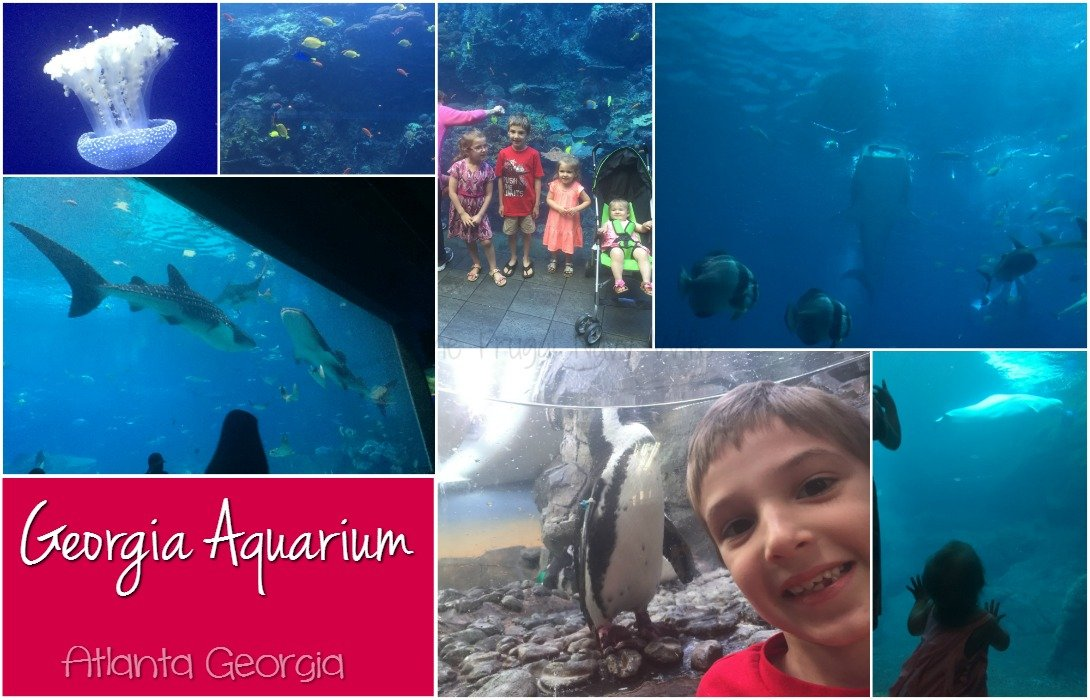 Georgia Aquarium Atlanta GA