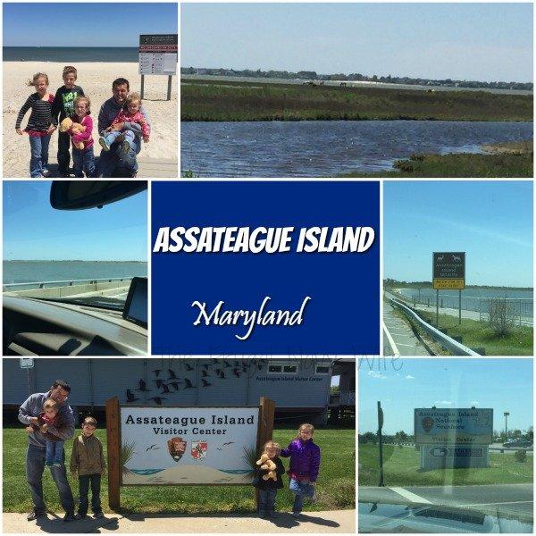Assateague Island Maryland