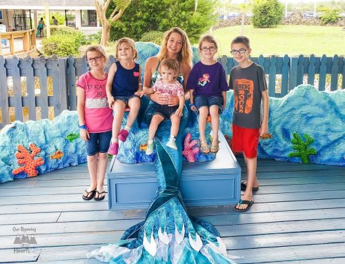 Weeki Wachee State Park Meet a Mermaid