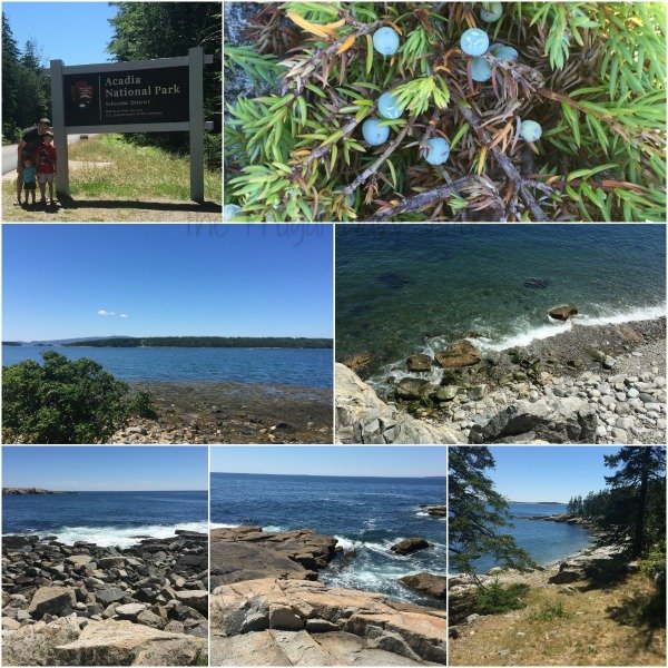 Acadia National Park Schoodic