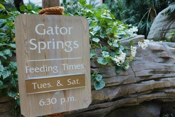 Gaylord Palms Hotel in Orlando Florida Gator Springs