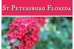 Taking your Family to Historic Sunken Gardens St Petersburg Florida