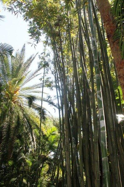 Taking your Family to Historic Sunken Gardens St Petersburg Florida Trees