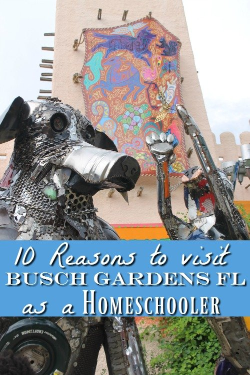 If you are homeschooling in Florida there are10 big reasons to make Busch Gardens Tampa FL part of your homeschool curriculum plus it's a fun break!