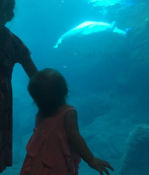 If you plan to visit Atlanta Georgia a stop at the Georgia Aquarium is a must for any family. Here is what you need to know before you go!
