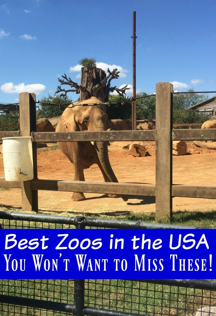 Best Zoos In The Us You Won 39 T Want To Miss These