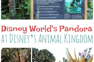 The New Disney World Pandora at Disney's Animal Kingdom