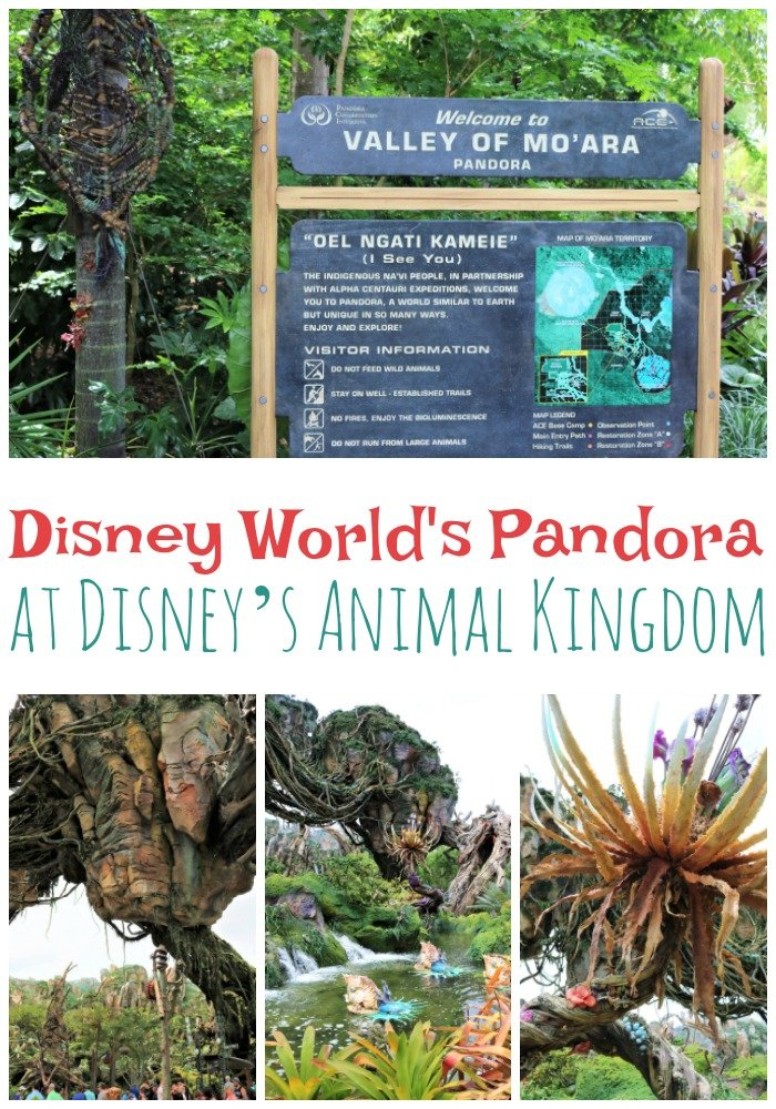 When visiting Disney World and Disney's Animal Kingdom make sure to check out the new area in the park the Disney World Pandora.