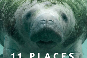 11 of the Absolute Best Places to View Manatees in Florida