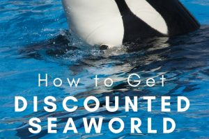 Discounted SeaWorld Tickets