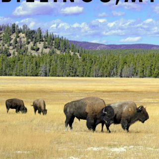 Looking for staycation ideas and things to do in Billings MT? Check out my list of must-see attractions and historic sites. #billings #montana #staycations #thingstodo #ourroaminghearts   Staycation Ideas   Billings Montana   Montana Travel