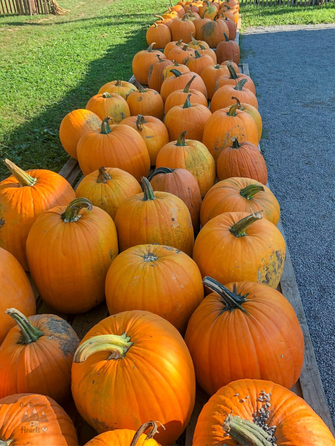 Long Acre Farms pumpkins