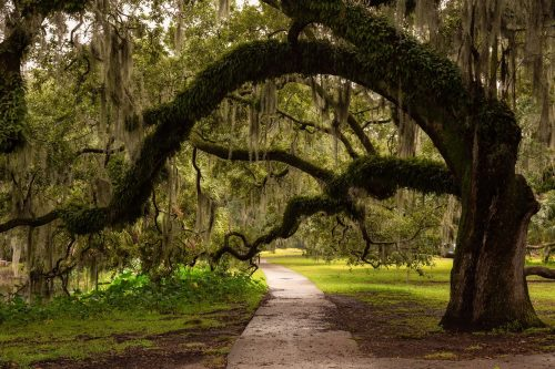 City Park, New Orleans, Louisiana, United States.