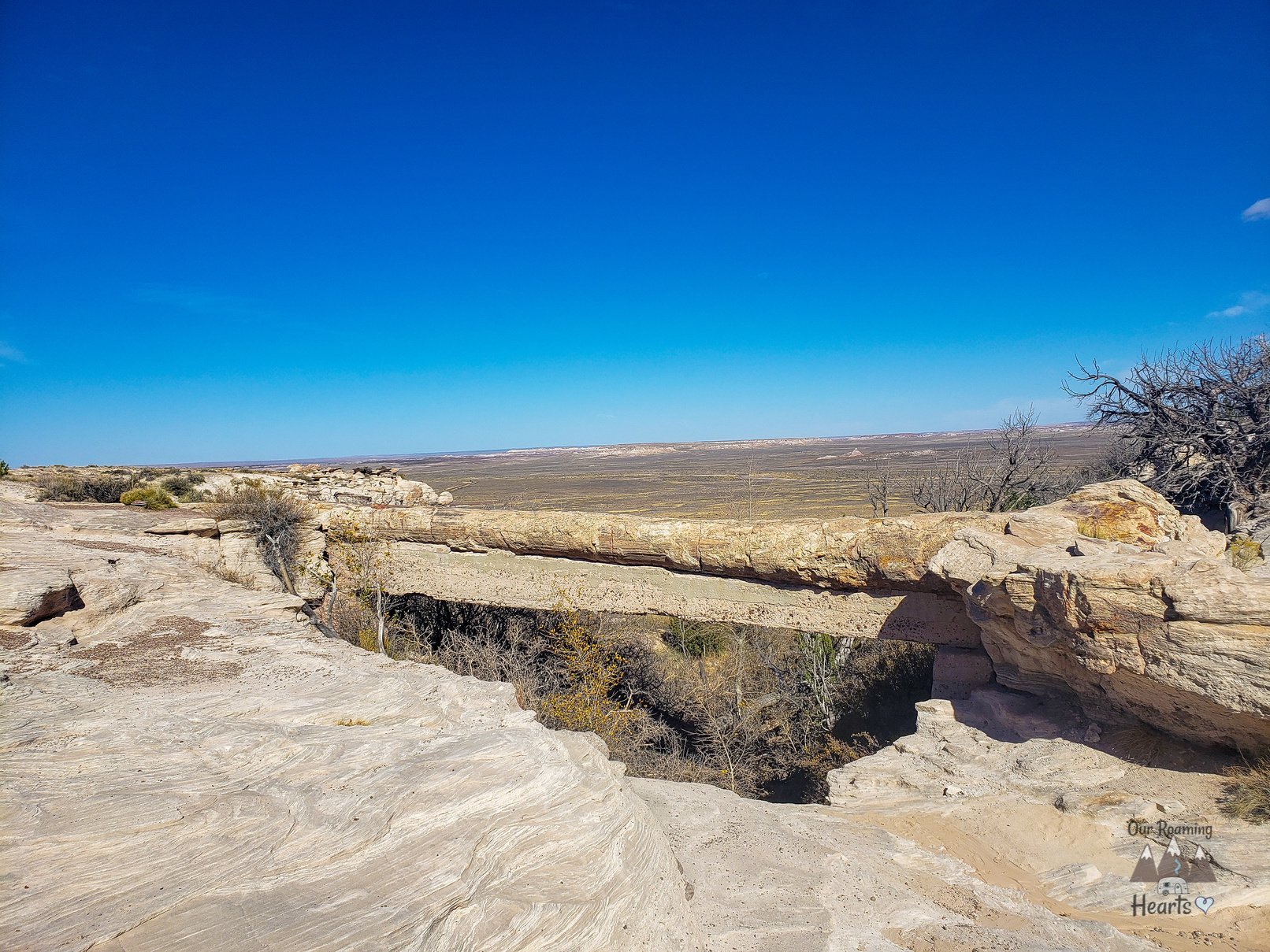 Petrified Forest National Park - Agate Bridge