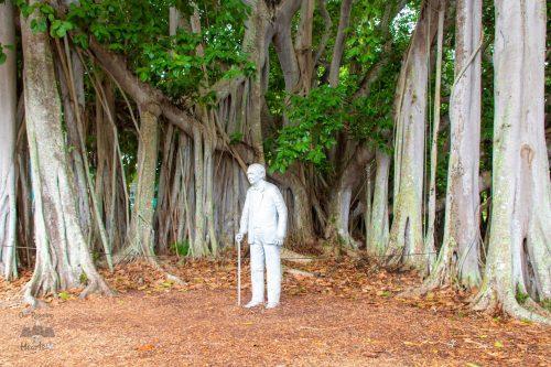 Edison Ford Estste Banyan Tree