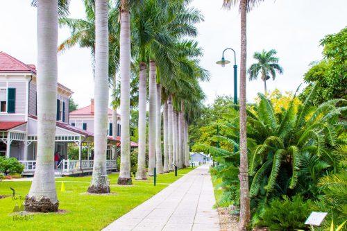 Edison Ford Winter Estate Palm Tree Row