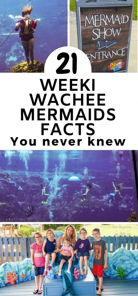 Have you heard about the Weeki Wachee Mermaids? They are real live mermaids that swim and perform at Weeki Wachee Springs State Park. #ourroaminghearts #weekiwacheemermaids #clearwater #florida | Weeki Wachee Mermaids | Florida | Traveling with Kids | Mermaid Performances | State Parks