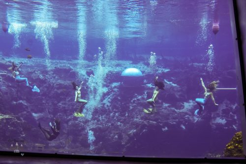 Weeki Wachee Mermaids Facts (4)