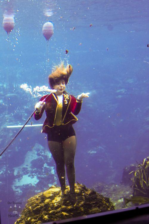 Weeki Wachee Mermaids Facts Weeki Wow Show