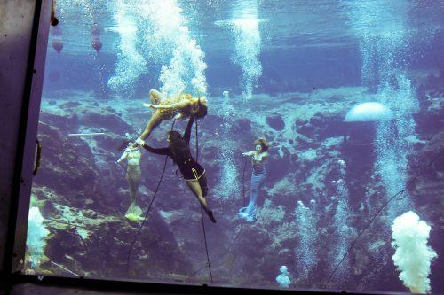Weeki Wachee Mermaids Facts