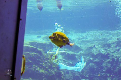 Weeki Wachee Mermaids Show Animals